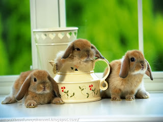 Three cute bunnies.