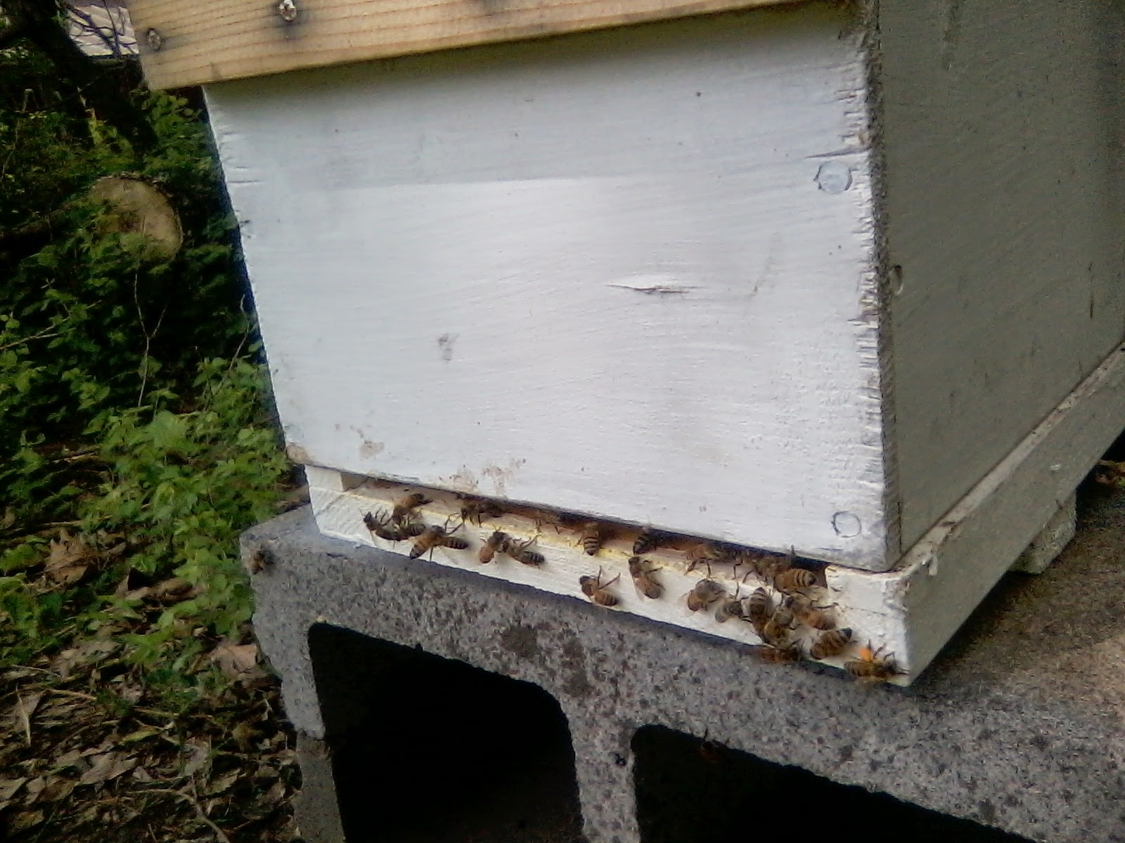Naturally Scientific Beekeeping: Spring Management of my Modified ...