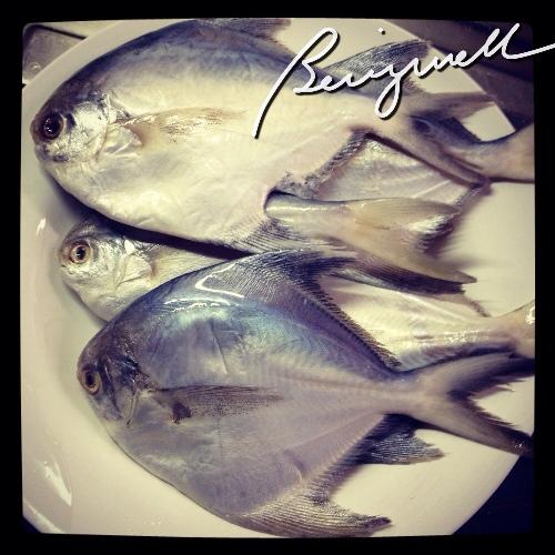 Pomfret on plates