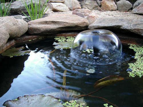 mini jardim aquatico: jardim para cuidar: Elementos de água..dê frescura ao seu jardim
