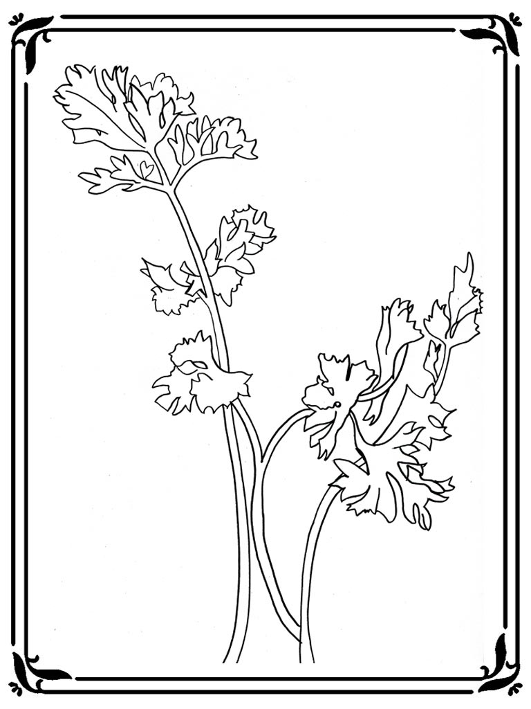 Adult Top Celery Coloring Page Images top celery stalk coloring page realistic pages gallery images
