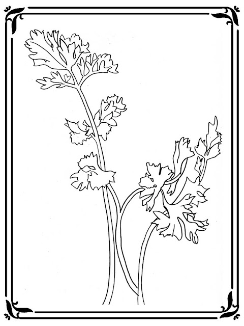 celery stalk coloring page