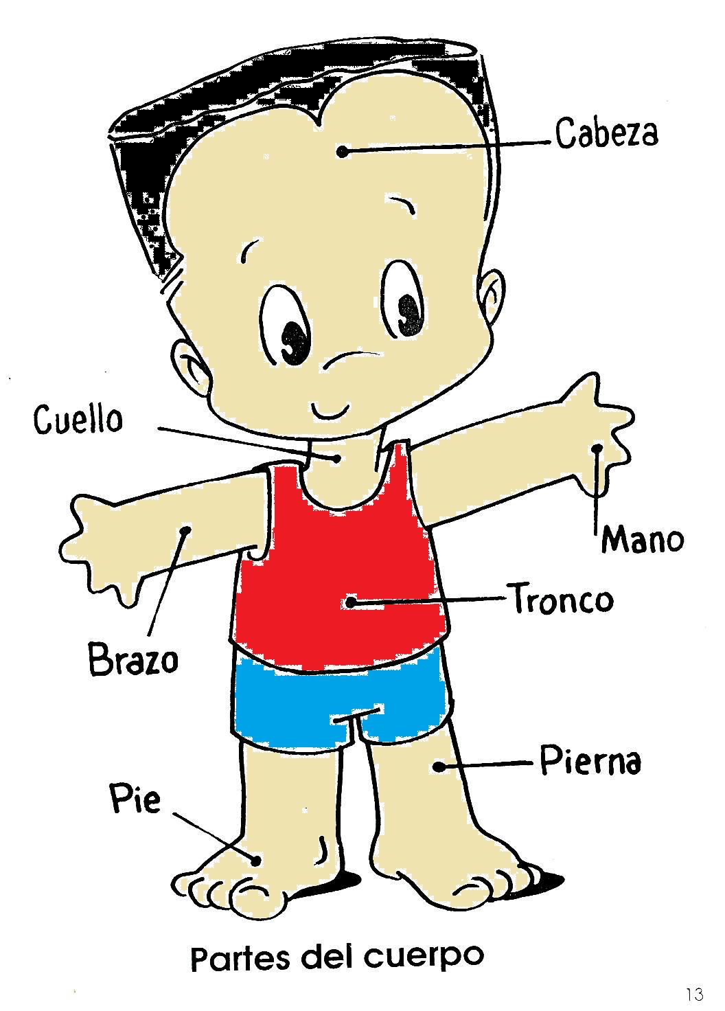 Pin cuerpo humano articulaciones y movimientos del laminas for Interior del cuerpo humano