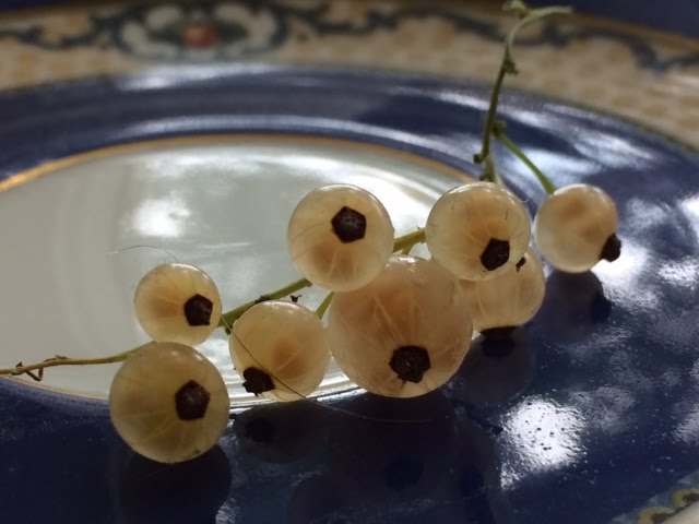 olbassam (white currants)