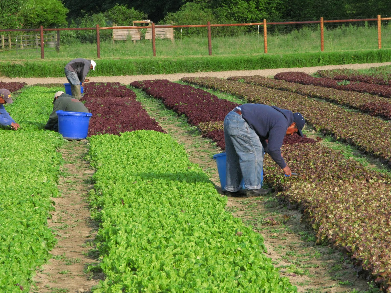 organic farm The organic farm school (ofs) offers a full-time, 8-month, experiential training program designed for aspiring farmers to learn and practice the skills they need to run a small-scale organic farm.