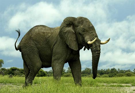 ... hanya hewan beratnya satu ton tetapi membuat satu t