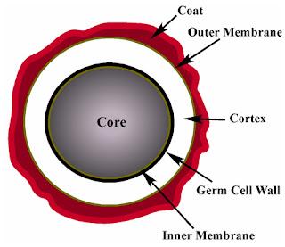 Nội bào tử