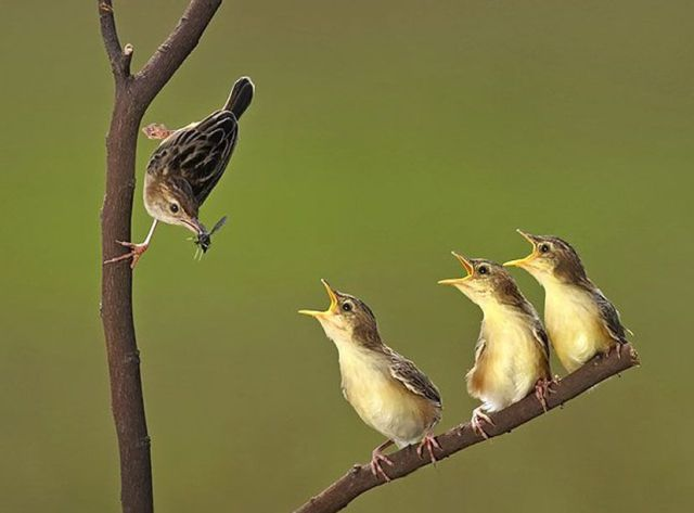 Funny Birds & Animals Seen On www.coolpicturegallery.us