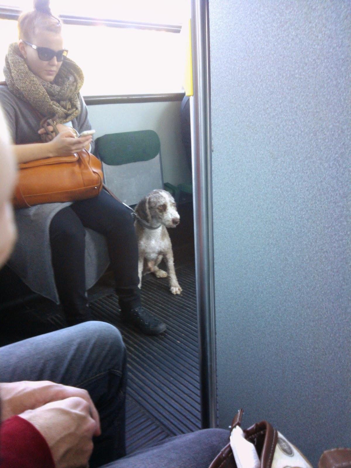 Na Finlândia cachorro anda de bonde, trem, navio e ônibus
