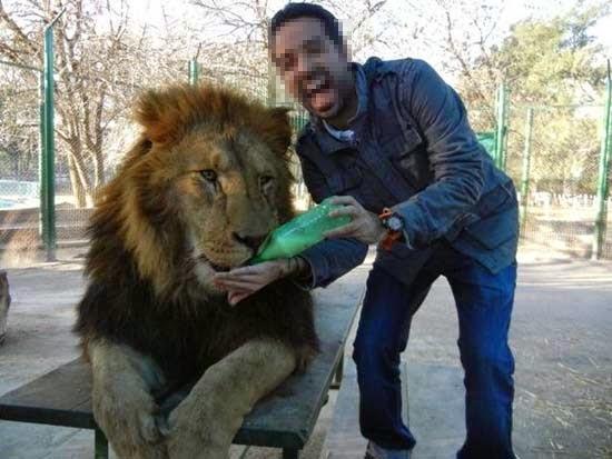 smešne slike: zoo radnik hrani lava
