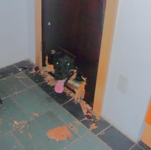 Ordinaire DIY Doggie Door