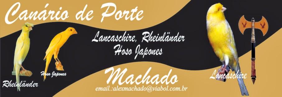 Canario de Porte Machado