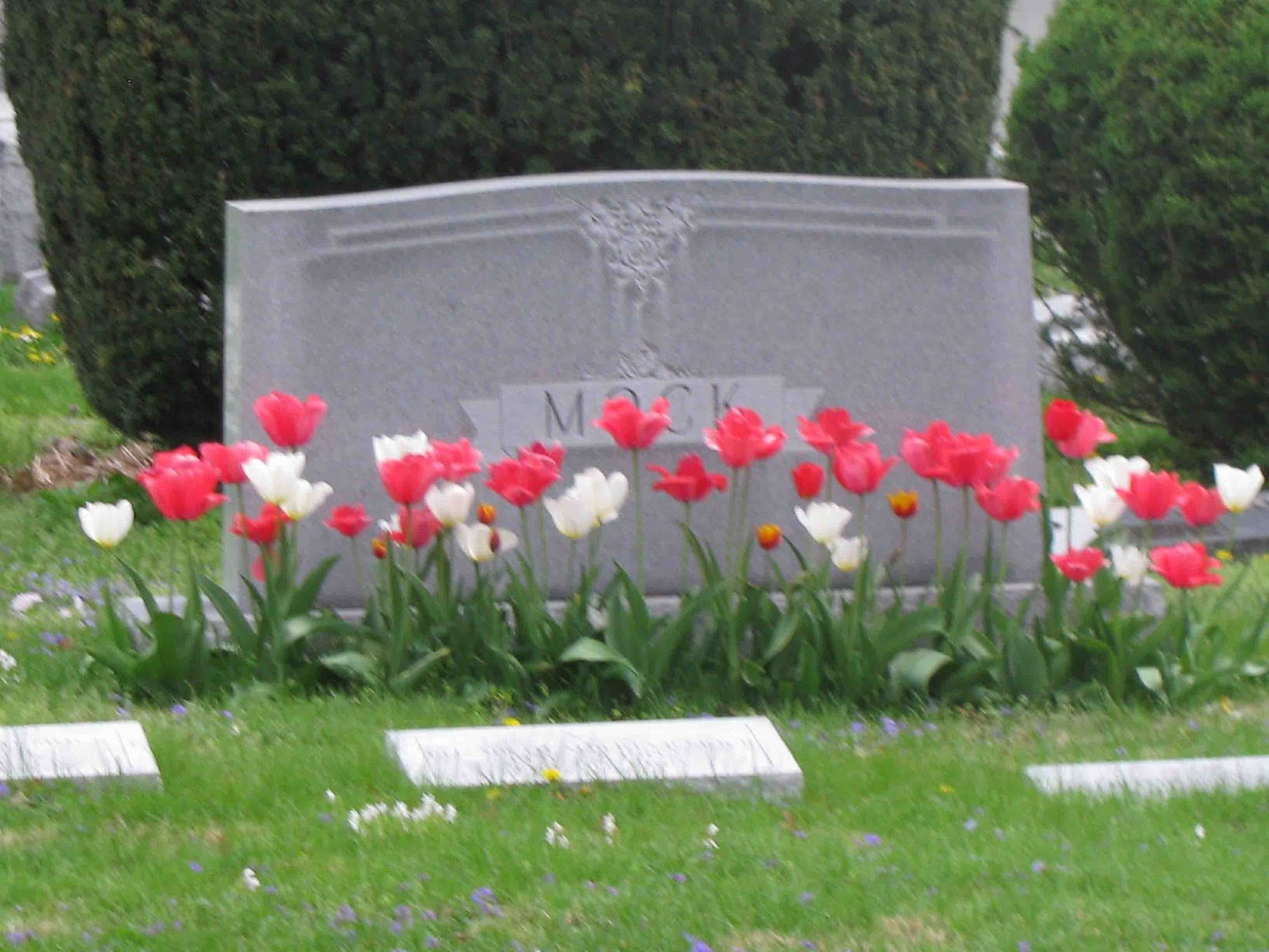 What are the flowers in the cemetery 38