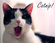 Labels: cat memes, memes