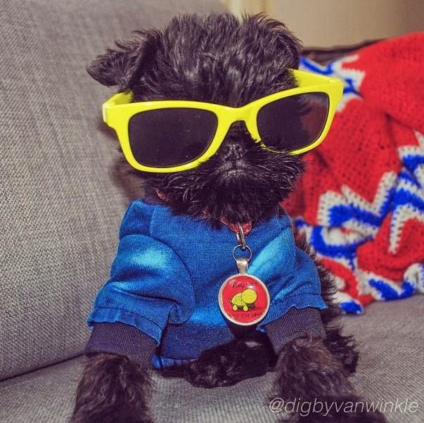 Top 5 Most Stylish Dog Breeds