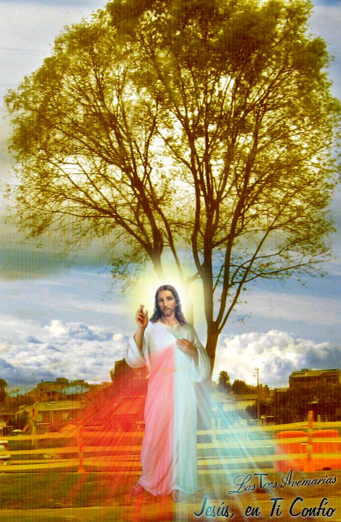 divina misericordia con arbol de fondo