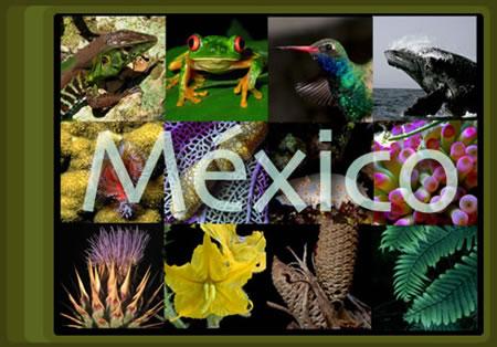 MEGADIVERSIDAD DE MEXICO