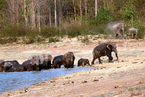 Wildlife Ang Rue Nai