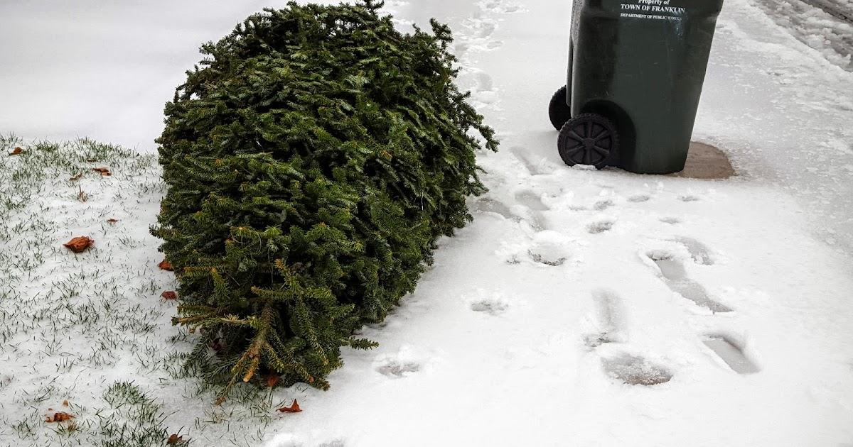 1200 x 630 jpeg 216kB, Franklin Matters: Christmas Tree Collection ...