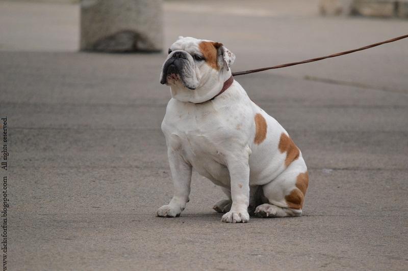 dogs photos photography animals