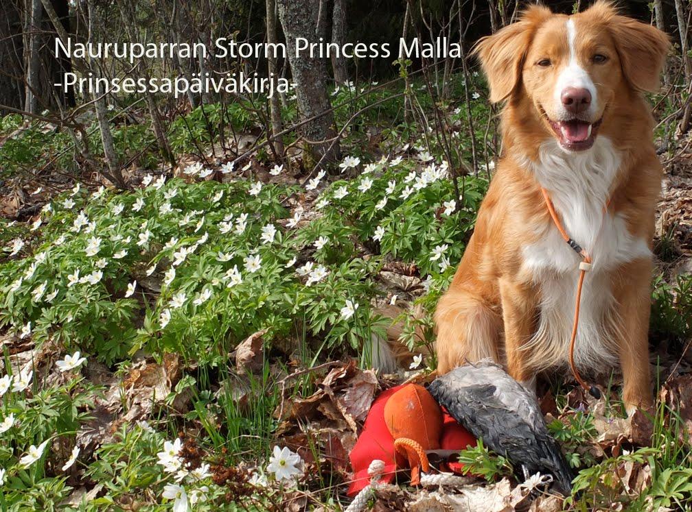 Malla - Prinsessapäiväkirja