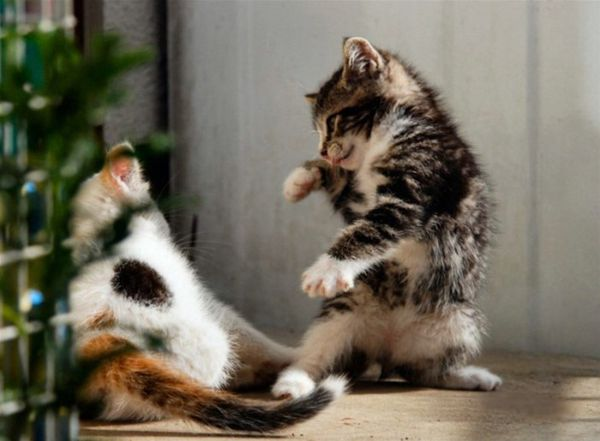 Latest funny pictures funny cats fighting pictures