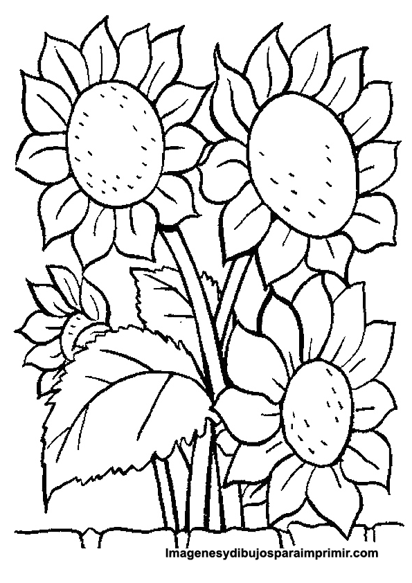 Coloring picture sunflowers