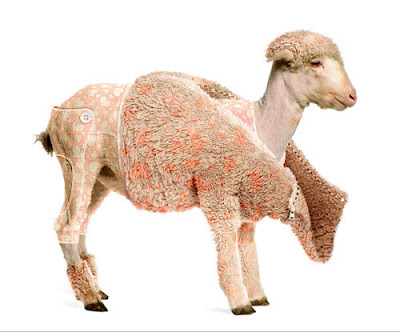 PSDTuts+ Create a Lamb's Coat in Photoshop