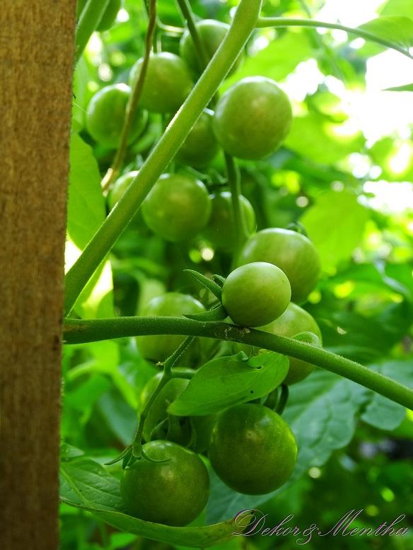 Shop a szép és ízletes kertért