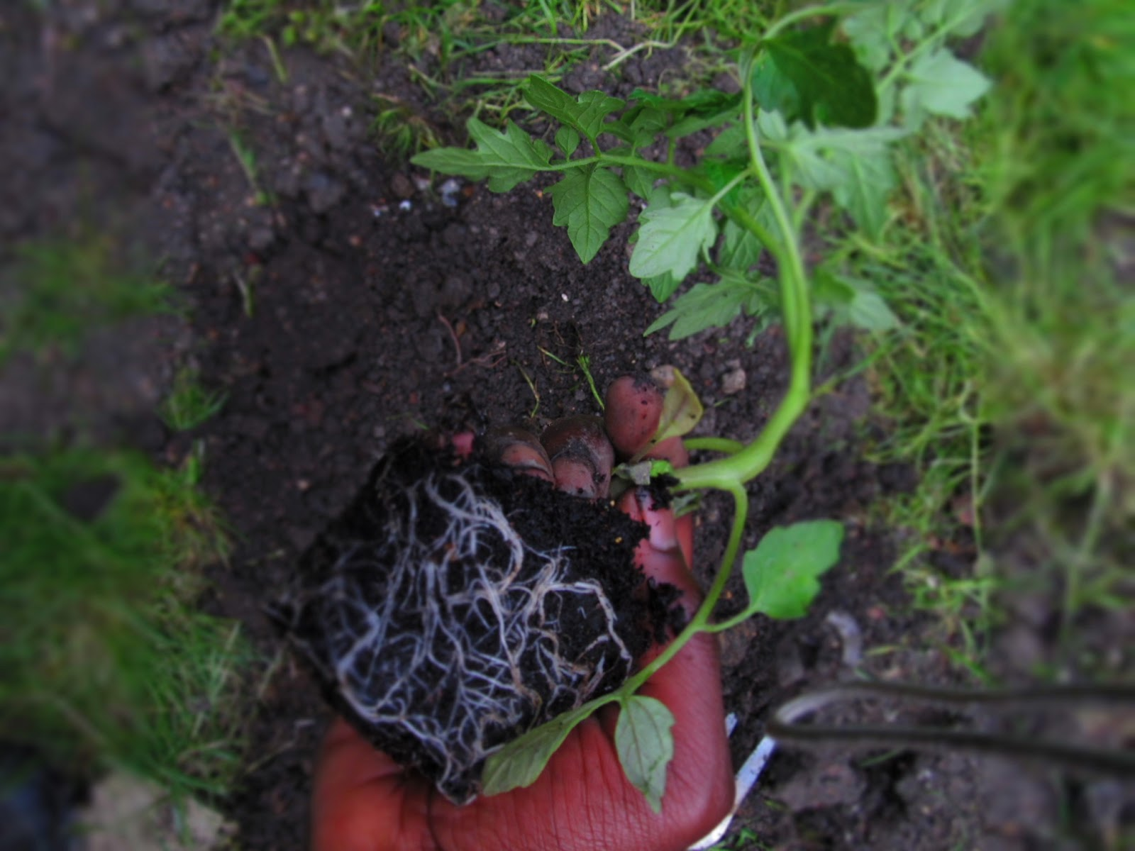 Glory charles gardening soil sun and food for Soil 7 days to die