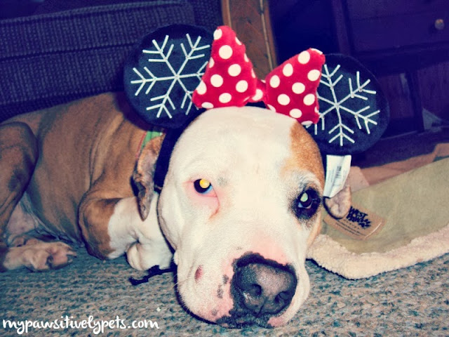 Disney Accessories for Dogs