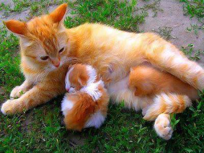 Ternyata selama ini kita sudah di bodohi oleh mitos kedokteran Cerita Kucing Berbahaya Cuma Haya untuk Mengangkat Citra Anjing