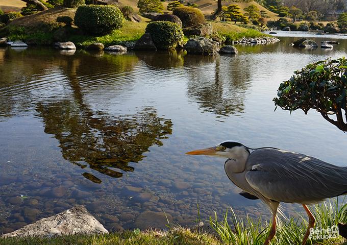 水前寺公園、熊本