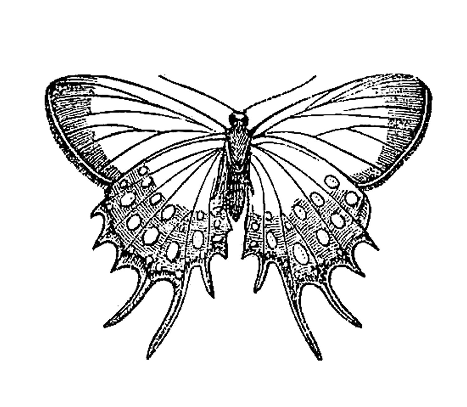 free vintage butterfly clipart - photo #42