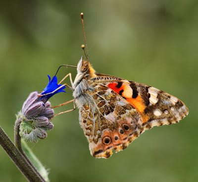 Hermosa mariposa sobre una flor silvestre