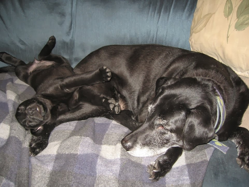 Cute dogs - part 6 (50 pics), adult dog sleeps with little puppy