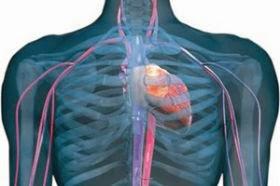 Regulación circulatoria