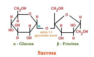 Molécula de sacarosa: combinación de los monosacáridos glucosa y fructosa