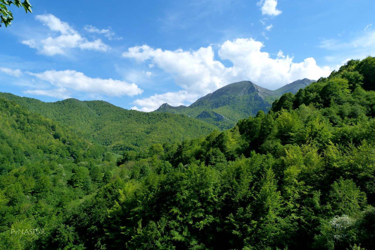 Hayedo de La Vallinona visto desde Lindes