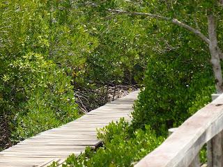 Mangrov Wood Koh Lanta
