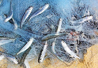 Image result for photos of fishing nets