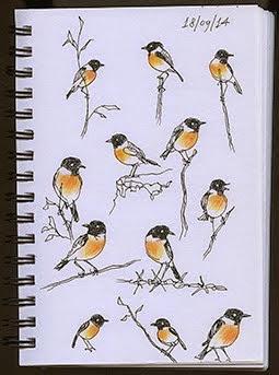 Vogels tekenen is moeilijk!