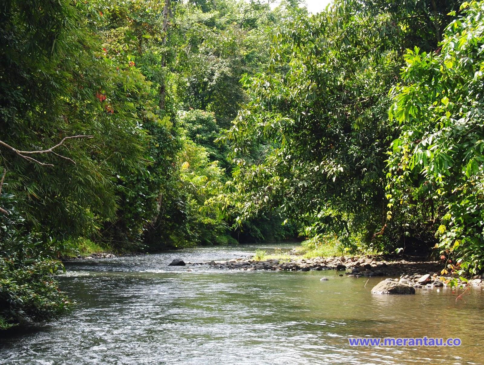 foto pemandangan sungai