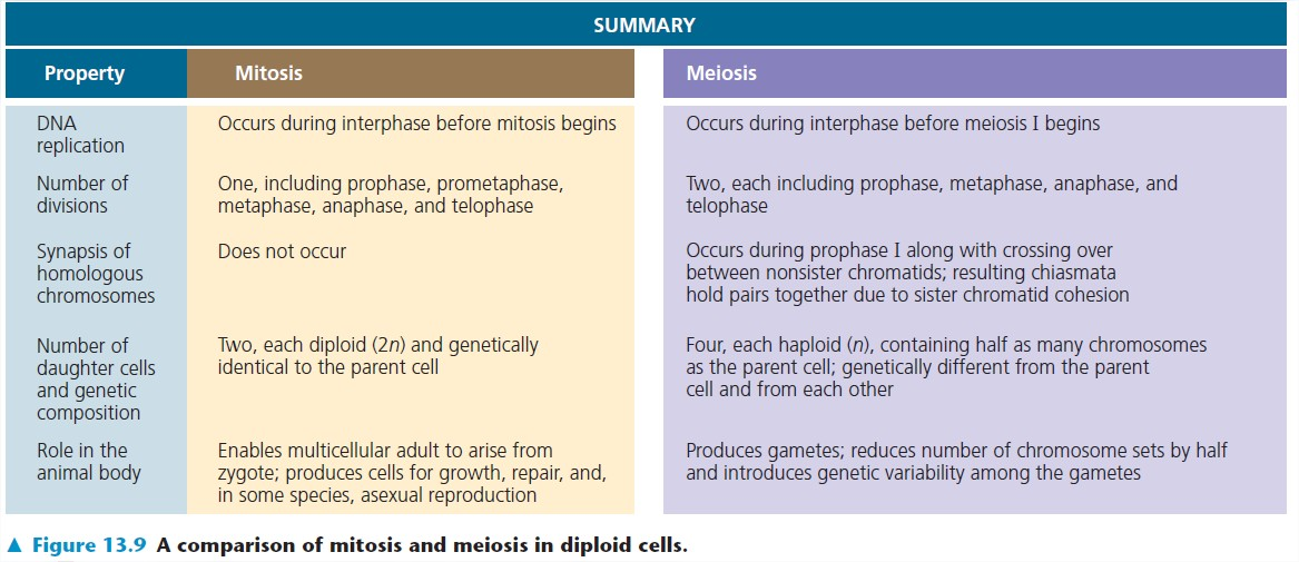 essay question for mitosis College essay writing service question description a compare mitosis to meiosis (explain how they differ and how they are alike) b consider the roles of two hormones involved in regulation of the concentration of calcium ions in the blood.