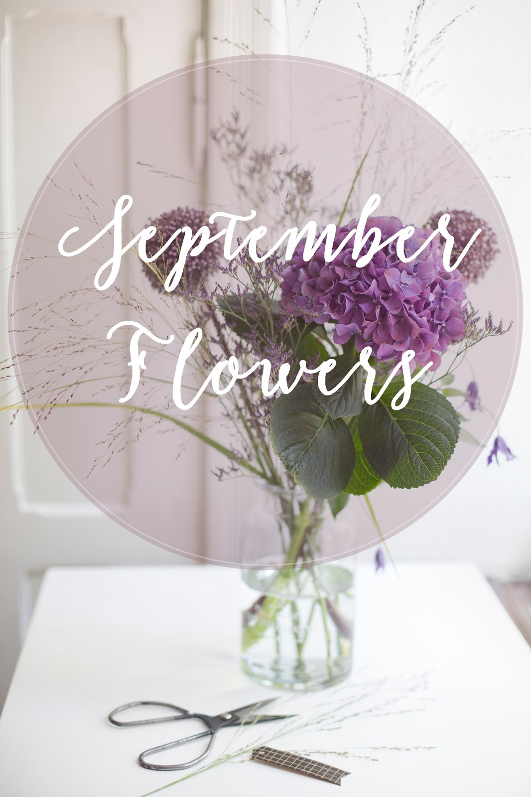 September Blumen in sattem Lila