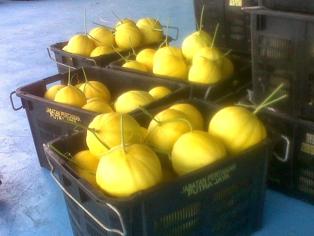 Melon Manis Terengganu semakin dapat perhatian.