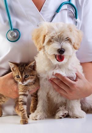 Doenças que podem afetar os olhos dos animais