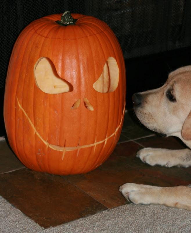 Halloween pumpkin pup