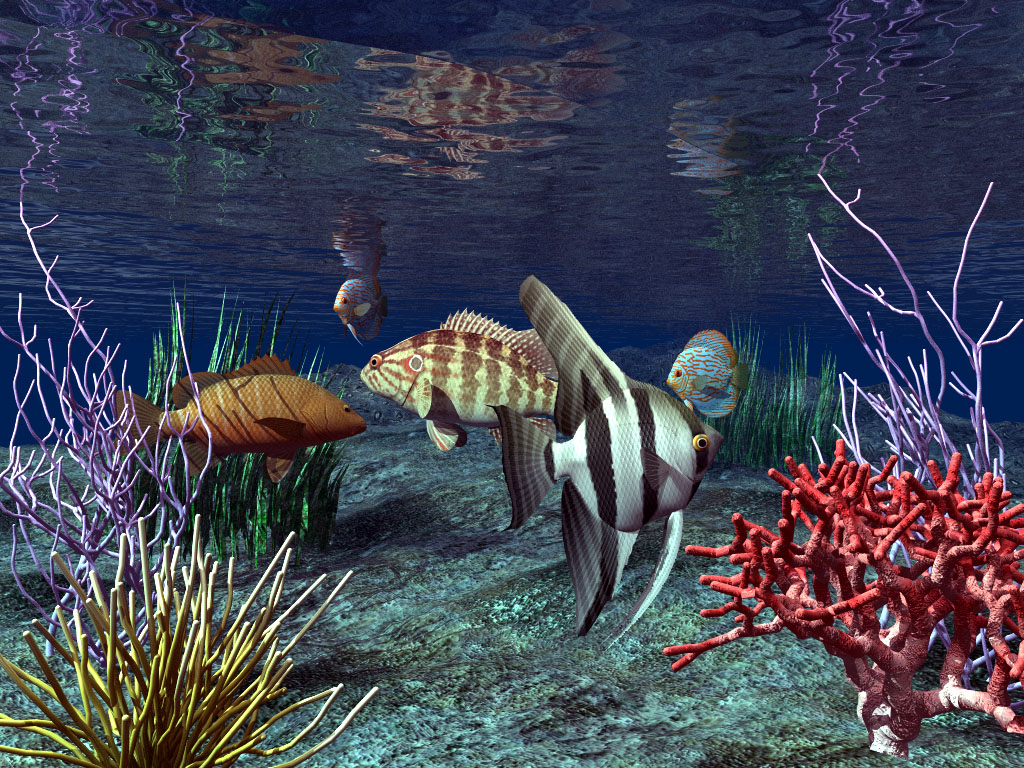 Real wallpapers 3d fish wallpaper for 3d fish wallpaper