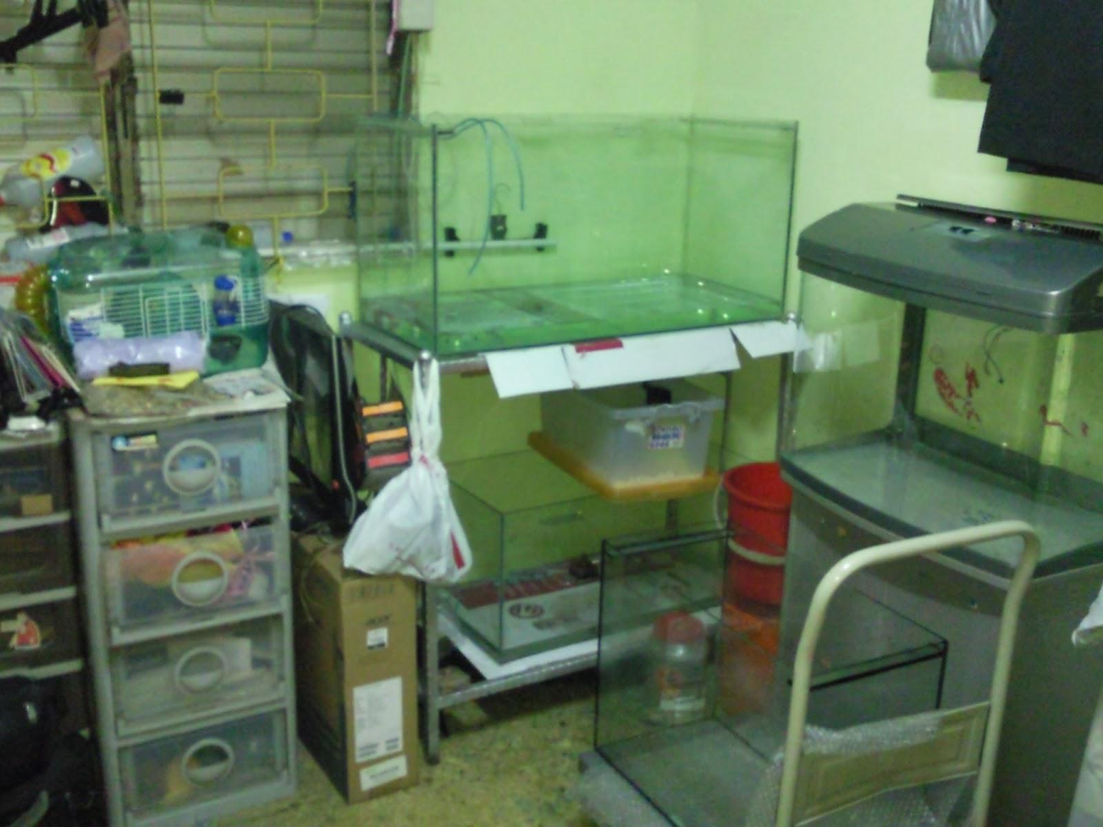 Aquarium fish tank singapore - Fish Tanks